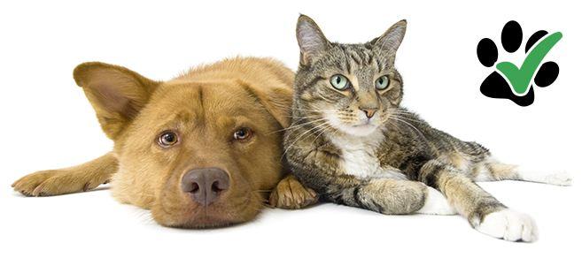 Bed and Breakfast che accettano animali